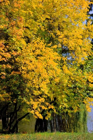 autumn colors in the park Stock Photo - 4241499