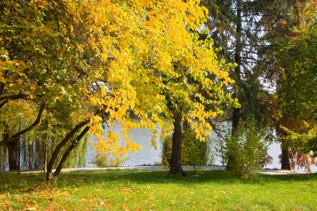autumn colors in the park Stock Photo - 4241498