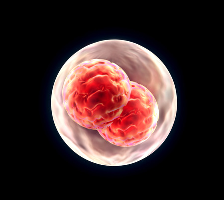 3d render of Embryo cleavage, medical illustration Stock Photo