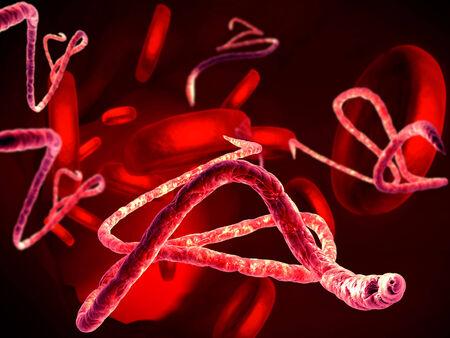 antibodies: 3d render, illustration of Ebola virus, Microscopic view.