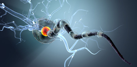 encephalon: High quality 3d render of nerve cell isolated on white background Stock Photo