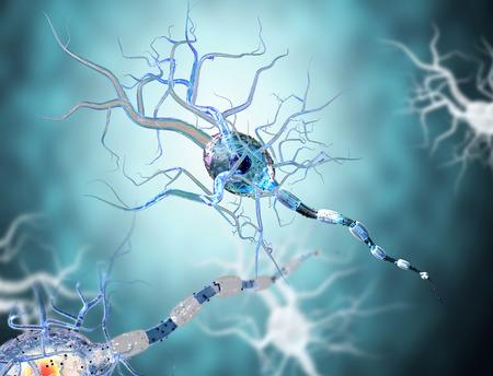 neuron: 3d de alta calidad de las c�lulas nerviosas aisladas sobre fondo blanco