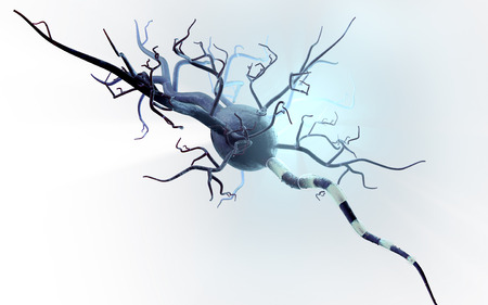 rn3d: High quality 3d render of nerve cell isolated on white background Stock Photo
