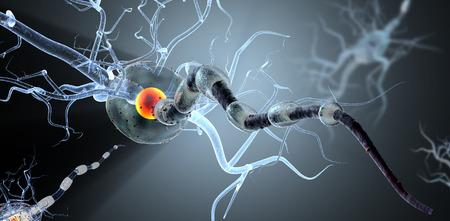 cellule nervose: 3d illustrazione medica, le cellule nervose. Concetto neuroni per le malattie neurologiche, tumori e la chirurgia del cervello.