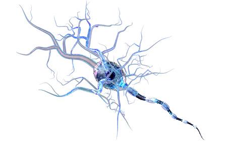 Hochwertige 3d von Nervenzellen machen isoliert auf weißem Hintergrund Standard-Bild - 37591290