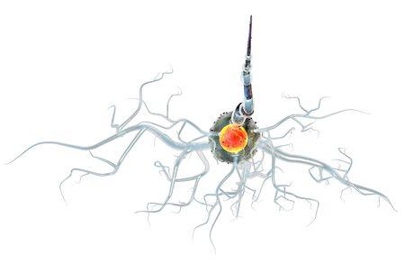 3D-afbeelding van zenuwcellen, concept voor neurologische aandoeningen, tumoren en hersenchirurgie. Stockfoto