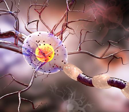 cellule nervose: illustrazione 3D di cellule nervose, concetto per le malattie neurologiche, tumori e la chirurgia del cervello.