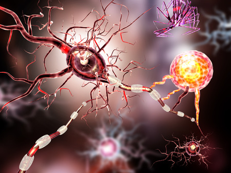 Supportive tissue of the nervous system. Neuron structure. Neuron, astrocyte glial cell, oligodendrocytes, axon. Banque d'images