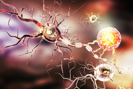 tejido de sostén del sistema nervioso. estructura Neuron. Neuron, células glial de astrocitos, oligodendrocitos, axón. Foto de archivo