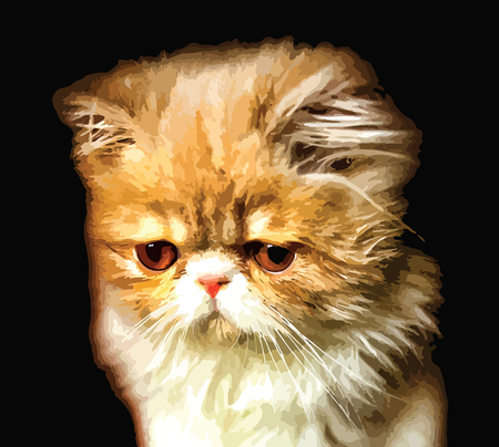 Cute white and orange persian breed kitten isolated on black background. eps10. Illustration