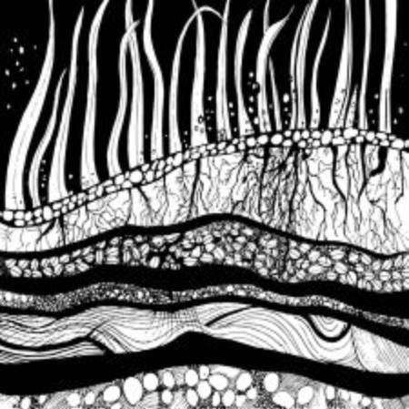 Original drawing, artwork, cross section of ground with grass, roots and seeds. Vector