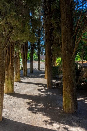 Trees in the Alhambra gardens in Granada, Spain, Europe on a bright summer day