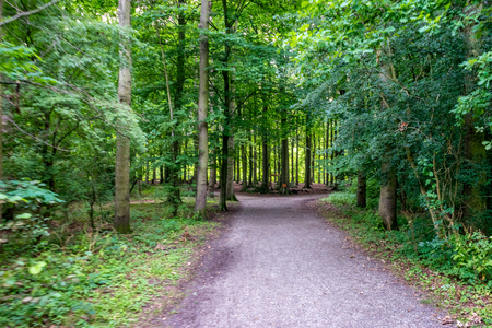 Muddy road leading into Haagse Bos, forest in The Hague, Netherlands, Europe