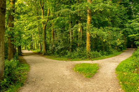 Muddy path parting into two at Haagse Bos, forest in The Hague, Netherlands, Europe Stock Photo - 100037961