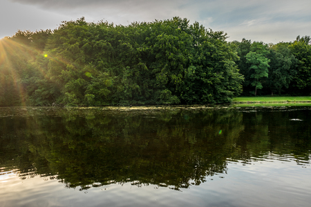 Water pond in Haagse Bos, forest in The Hague, Netherlands, Europe