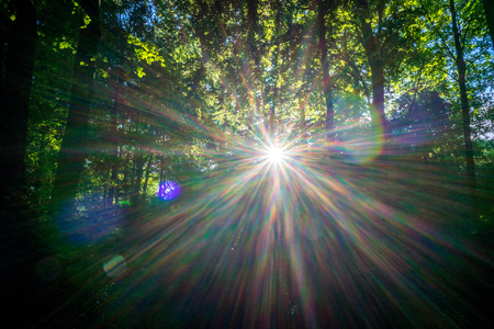 Solar flare between trees in Haagse Bos, forest in The Hague, Netherlands, Europe 스톡 콘텐츠