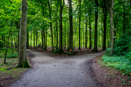 Parting of a road at Haagse Bos, forest in The Hague, Netherlands, Europe
