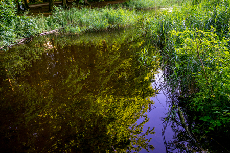 Water pond in Haagse Bos, forest in The Hague, Netherlands, Europe Stock Photo - 100039104