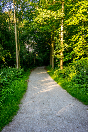 A muddy path leading into the Haagse Bos, forest in The Hague, Netherlands, Europe Stock Photo