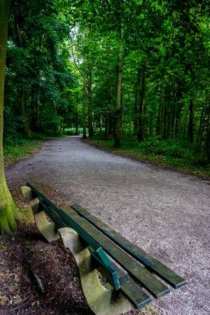 A wooden bench on a muddy road in Haagse Bos, forest in The Hague, Netherlands, Europe Stock Photo - 100041333
