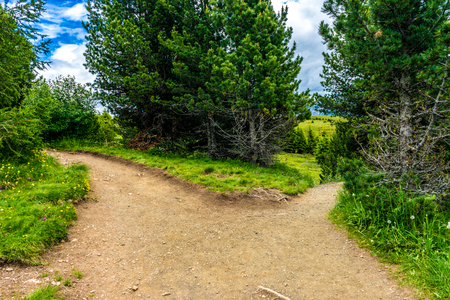 Alpe di Siusi, Seiser Alm with Sassolungo Langkofel Dolomite, Muddy path parting into two