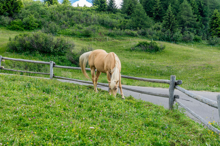 Alpe di Siusi, Seiser Alm with Sassolungo Langkofel Dolomite, a brown horse standing