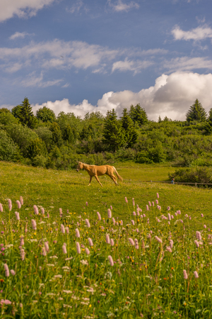 Alpe di Siusi, Seiser Alm with Sassolungo Langkofel Dolomite, a horse running on a lush green field Imagens