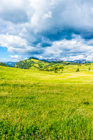 Italy, Alpe di Siusi, Seiser Alm with Sassolungo Langkofel Dolomite, a close up of a lush green field