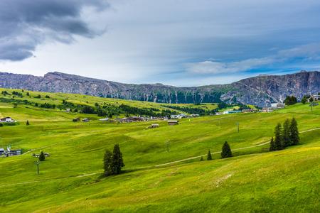 Alpe di Siusi, Seiser Alm with Sassolungo Langkofel Dolomite, a close up of a lush green field