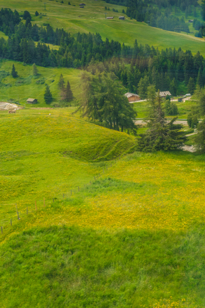 Italy, Alpe di Siusi, Seiser Alm with Sassolungo Langkofel Dolomite, a herd of sheep grazing on a lush green field
