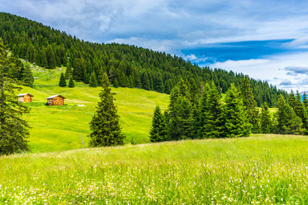 Italy, Alpe di Siusi, Seiser Alm with Sassolungo Langkofel Dolomite, a lush green field 스톡 콘텐츠