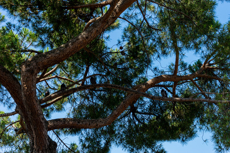 Europe, Italy, Venice, LOW ANGLE VIEW OF TREES AGAINST SKY 写真素材