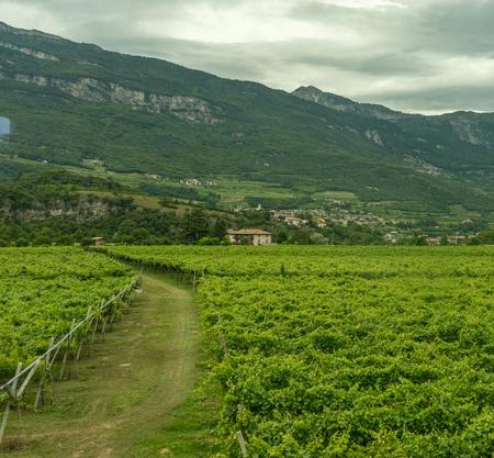 Europe, Italy, La Spezia to Kasltelruth train, a view of a lush green field