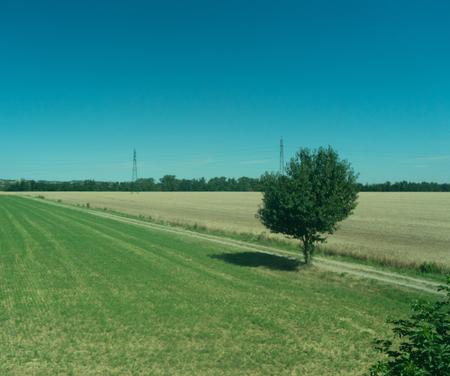 Europe, Italy, La Spezia to Kasltelruth train, a close up of a lush green field