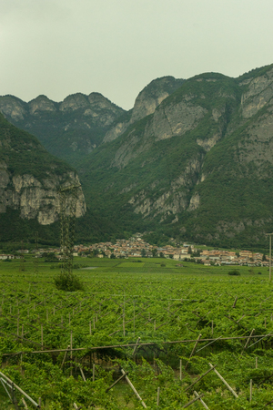 Italy,La Spezia to Kasltelruth train, a wineyard with a mountain in the background 写真素材