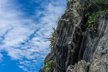Europe, Italy, Cinque Terre,Riomaggiore, a close up of a rock next to a tree