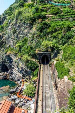 Railroad tracks amidst trees and plants