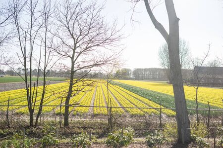 Flower garden, Netherlands, Europe, a large green field with trees in the background
