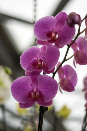 Flower garden, Netherlands, Europe, a vase filled with purple flowers Stock fotó