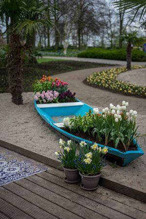 Flower garden, Netherlands, Europe, a close up of a flower garden