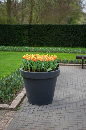Flower garden, Netherlands, Europe, a bench in a garden
