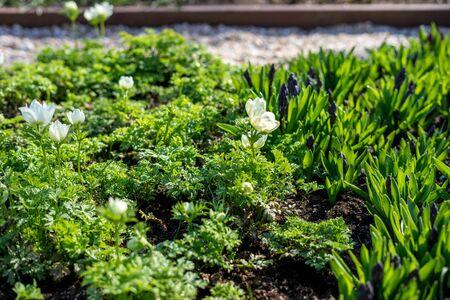 Flower garden, Netherlands, Europe, a green plant in a garden