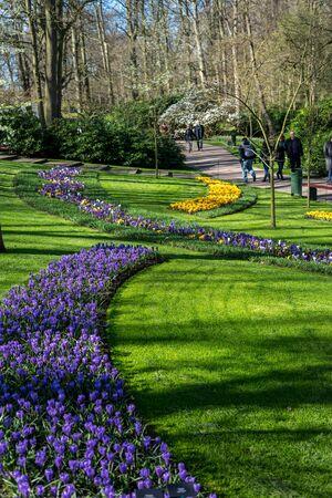 Flower garden, Netherlands, Europe, a close up of a lush green field Stockfoto