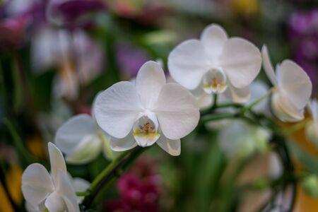 Flower garden, Netherlands, Europe, a close up of a flower