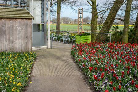 Flower garden, Netherlands, Europe, a close up of a flower garden in front of a building 版權商用圖片