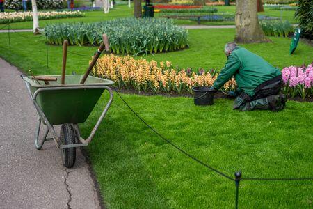 Ogród kwiatowy, Holandia, Europa, grupa leżaków siedzących na polu pokrytym trawą
