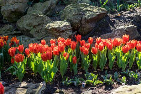 Giardino fiorito, Paesi Bassi, Europa, un gruppo di fiori colorati