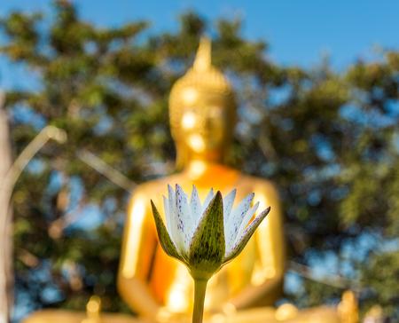 bouddha: Lotus Whte et Bouddha d'or dans le fond. Big Buddha Colline