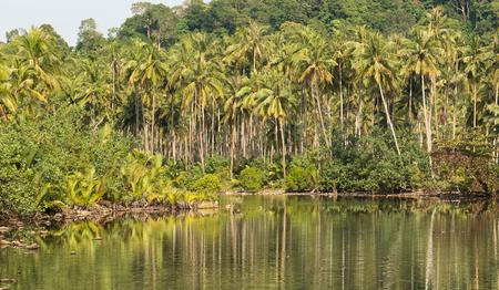 kood: Tropical coconut jungle on Koh Kood island in Thailand