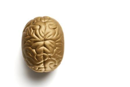 Brain isolated on white background. Top view with copyspace. Education and intelligence Stock Photo
